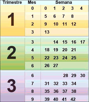 Calendario de conversi n de semanas a meses en el embarazo mam y maestra - Con cuantos meses se sienta un bebe ...